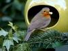 bird-1983858_1920