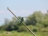 birds-1909800_1920