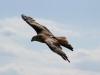 birds-217591_1920