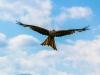 flight-393505_1920
