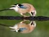 nasi_ptaci402.jpg