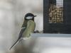 small-birds-1046518_1920