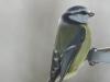 small-birds-1046525_1920