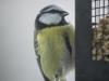 small-birds-1046540_1920