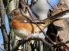 bird-1136051_1280