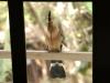 bird-81890_1920