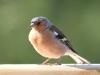 bird-932521_1920