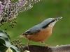 bird-984376_1280