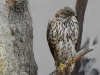 bird-of-prey-1008497_1920