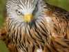 bird-of-prey-848906_1920