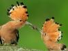 birds-poland_00393945