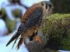 falcon-961123_1920