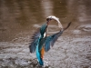 kingfisher-1068480_1920