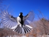 night-bird-1126076_1920