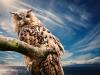 owl-591302_1920