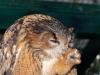 owl-735848_1920