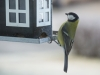small-birds-1046512_1920