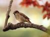 sparrow-9950_1280
