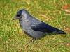7bird
