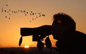 Birdwatcher_1456729c